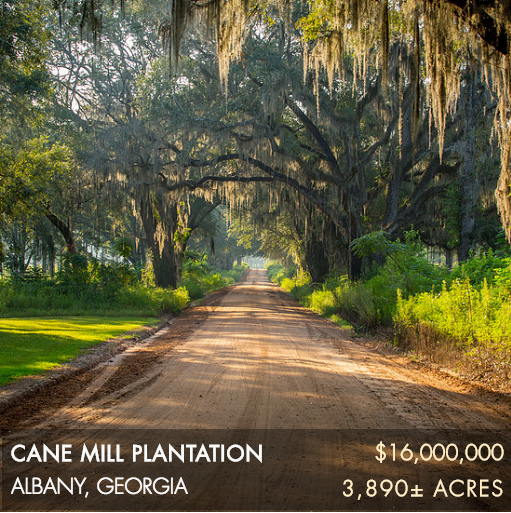 Located in the heart of Albany's storied quail country, Cane Mill Plantation has always been an important and core hunting property within this landscape. Surrounded by other esteemed plantations that include Abigail, Pineknoll, Magnolia and Deer Run, Cane Mill offers the rare opportunity to pursue wild quail among the native habitats of South Georgia's sprawling upland ecosystem. Cane Mill is 3,890± acres with ~82% in productive uplands. The landscape is diverse and the hardwood bottoms of Mud Creek offer great hunting diversity for trophy deer and eastern turkeys. The plantation includes 160± acres of irrigated farmland and 225± acres of non-irrigated fields. Built in 2002, the plantation home is modest in size and provides a very comfortable setting.