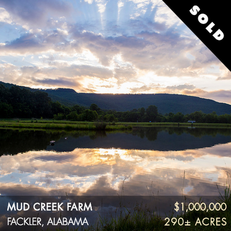 Mud Creek Farm (MCF) is 290± acres located in northeast Alabama. This farm offers a lot of quality hunting and fishing opportunities – way more than its size would suggest. The water resources on the farm are excellent. Mud Creek, a major tributary to the Tennessee River, flows through the center of the property for nearly a mile. In addition, there is a 13-acre trophy bass lake that is fed by a natural spring.  In the past, the current owner has had success in attracting solid numbers of ducks with little effort.
