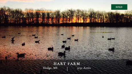 Located in the premier waterfowl hunting area of the Mississippi Delta, the Hart Farm is 313± acres uniquely positioned to a federal wildlife refuge that makes the property act and feel much larger than it is. The wildlife resources on this property are tremendous and it offers world class waterfowl and trophy deer hunting.