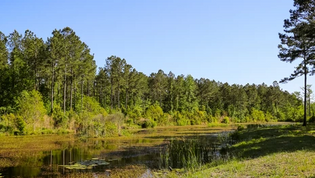 Consisting of 547± acres, Brooks Hill is a strategic timber and recreational property located in one of South Carolina's historic and prestigious plantation neighborhoods just north of Georgetown and bordering several riverfront plantations along the Pee Dee and Black Rivers.  Brooks Hill was formerly part of Keithfield Plantation and is located on Plantersville Road, adjacent to Weymouth, Ingleside, and Nightingale plantations and just down from Chicora Wood, Exchange, Rosebank, and Arundel.  While most plantations nearby are protected from development by a conservation easement, Brooks Hill is unencumbered and provides a number of tax and investment strategies to a new owner.  The wildlife and recreational opportunities are naturally strong on the property. The majority of the property is in planted pine, 15-to-25-year-old trees.