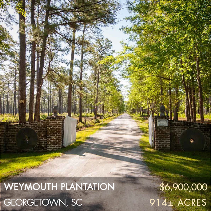 Located on South Carolina's Pee Dee River, Weymouth Plantation is a historic and diverse well-managed recreational property.  The plantation is located on Plantersville Road, a scenic road made up of some of the most significant plantation properties in the state, including Chicora Wood, Exchange, Rosebank, and Arundel.  Weymouth is 914± acres and has a broad range of habitat types that provide an enormous amount of quality outdoor hunting and fishing opportunities.  The upland pines and longleaf have been managed for quail, there are duck impoundments, and great deer and turkey hunting.  Situated on the river, a mile and a half from the paved road, the main house is surrounded by huge live oaks and the setting is the definition of serene.
