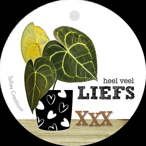 Liefs - Plant - set van 5 kaarten