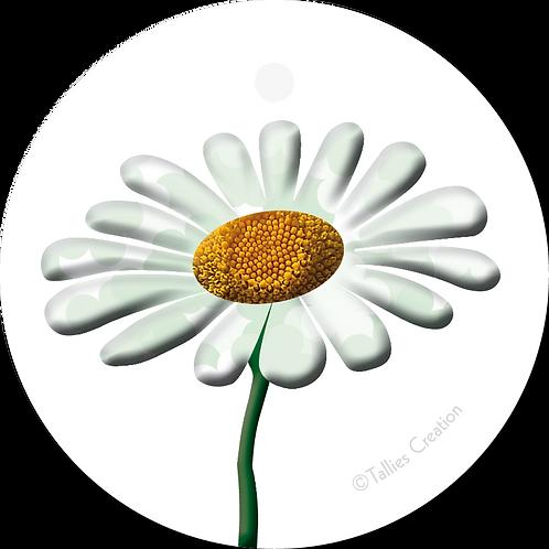 Blanco madelief - PrimoFiori - set van 5 kaarten