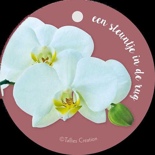 Steuntje in de rug - Flowerpower - set van 5 kaarten