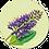 Thumbnail: Blanco A - Flowerpower - set van 5 kaarten