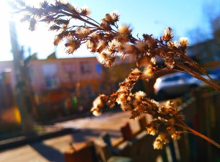 Начинаем проект «Долгожданная весна»