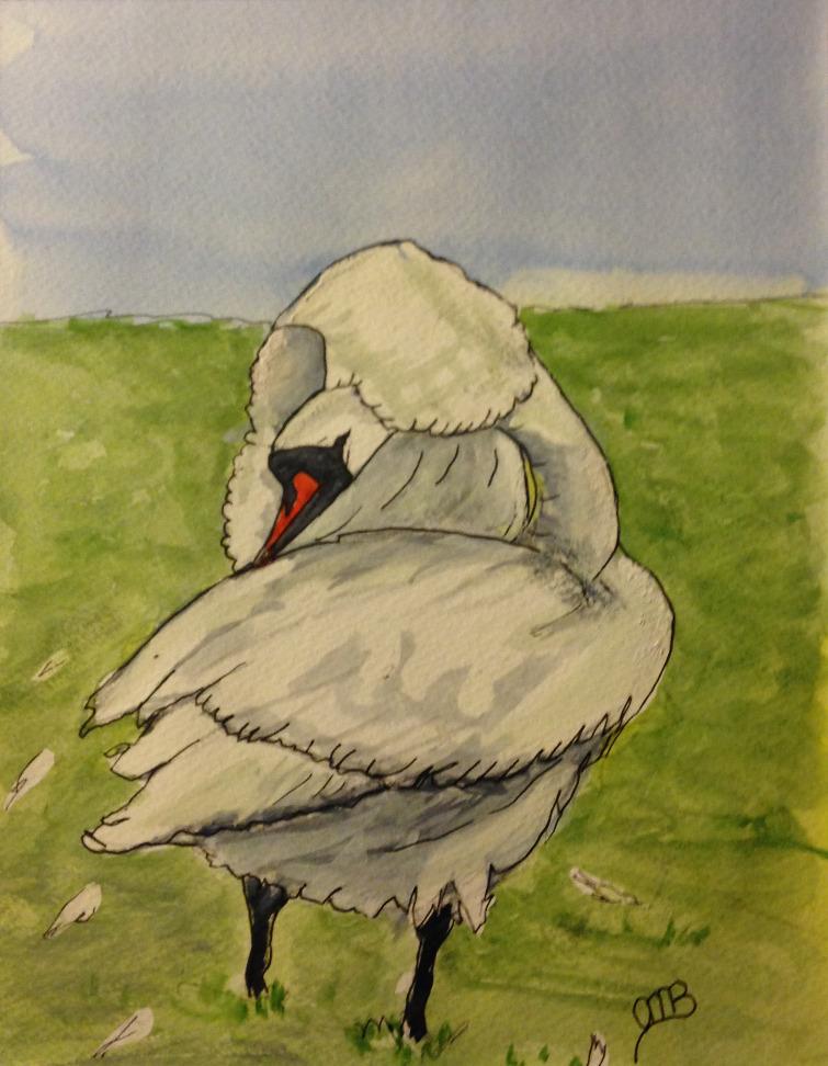 Grooming Swan, Currachase, Limerick