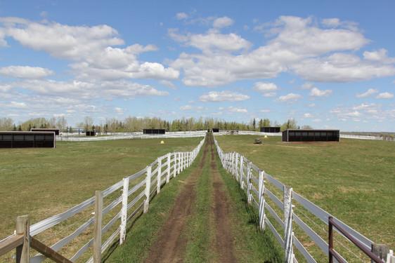 Horse Shelters.JPG