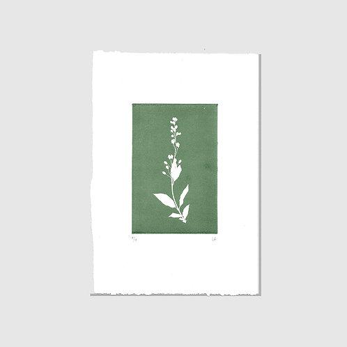 Herbarium Print