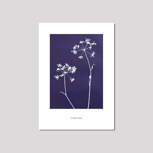 Poster A4/A3 - Duo Kerbel blau weiss