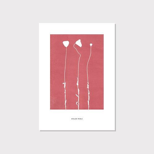 Poster A4 - Mohnblumen Trio