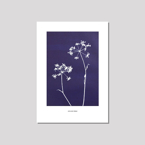 Poster A3 - Duo Kerbel blau weiss