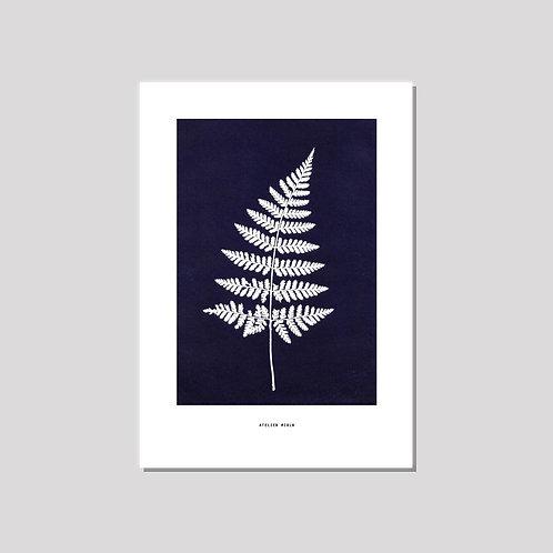 Poster A3 - Farn schwarzblau weiss