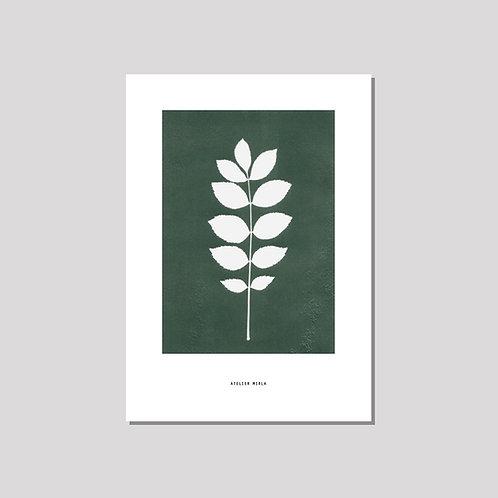Poster A4 - Esche grün weiss