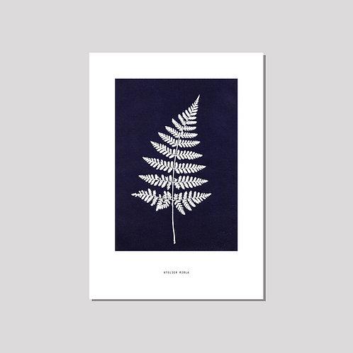 Poster A4 - Farn schwarzblau weiss