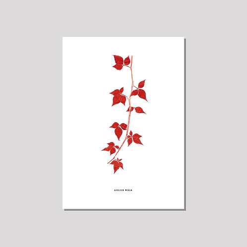 Poster A4 - Rebe weiss rot