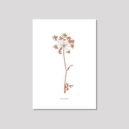 Poster A3 - Kerbelblüte Siena