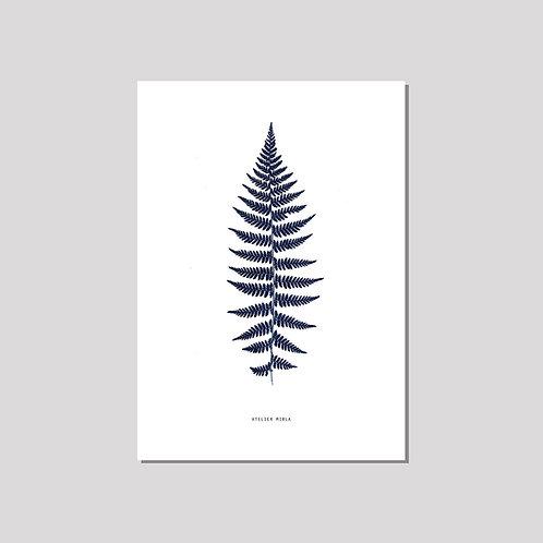 Poster A4 - Farn weiss blau