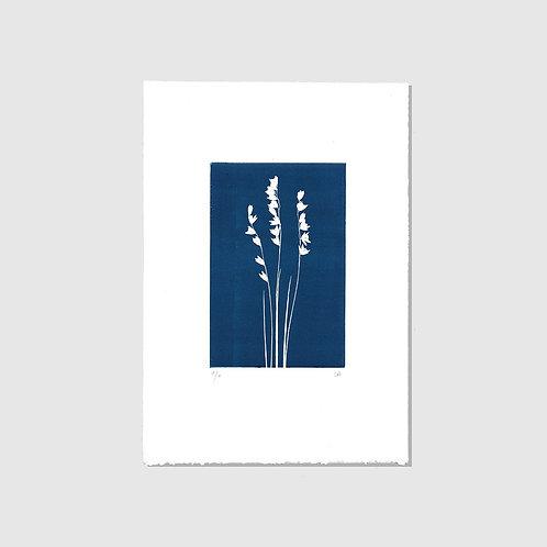Perlgräser blau
