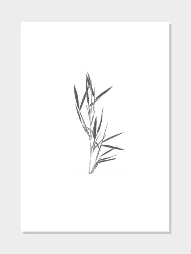 Bambus weiss schwarz