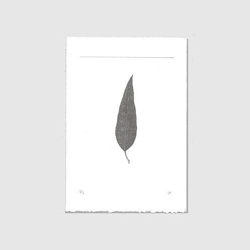 Minimal leaf