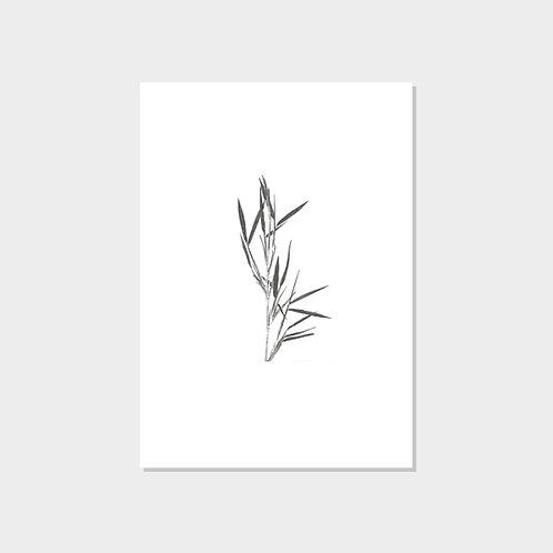 Ltd. Fine Art Print 61x43 cm