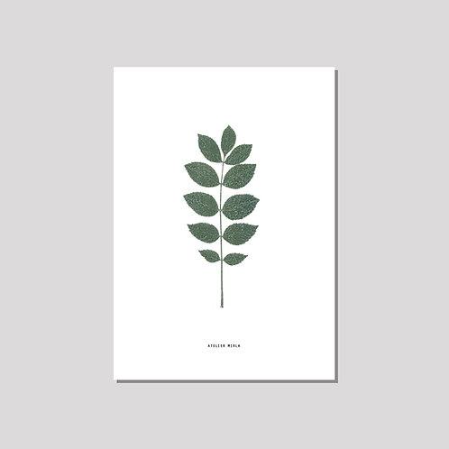Poster A4 - Esche weiss grün