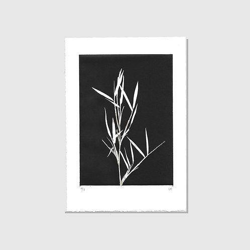 Bambus schwarz