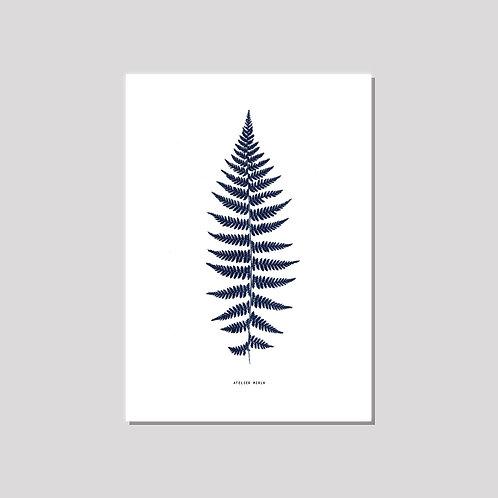 Poster A3 - Farn weiss blau