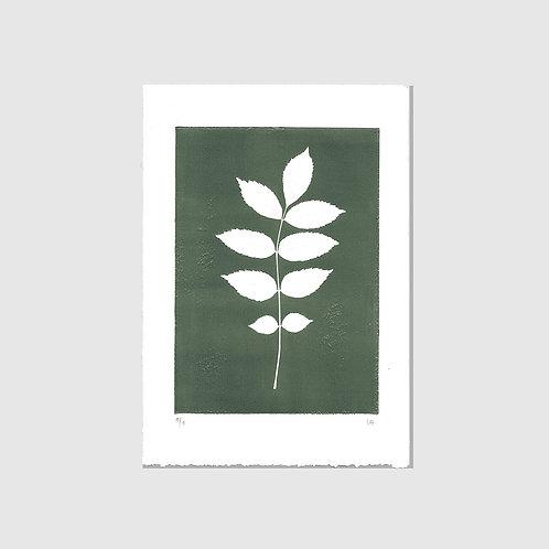 Esche grün