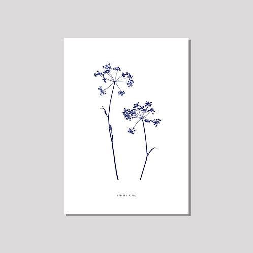 Poster A4 - Duo Kerbel weiss blau