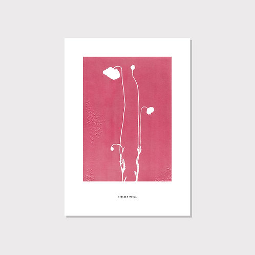 Poster A4 - Mohnblume pink