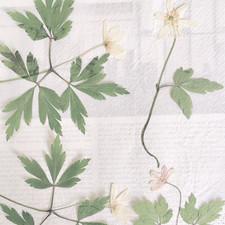Herbarium Insight