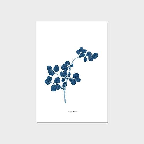 Poster A4 - Zweig weiss blau