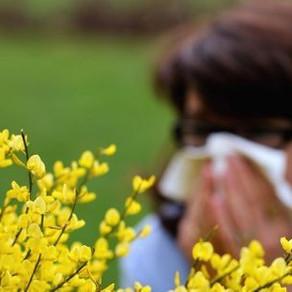 Allergie aux pollens : pic, symptômes, que faire vite ?