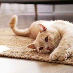 Le comportement de votre chat vous a toujours intrigué ?