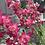 Thumbnail: Faux Delphinium Stem