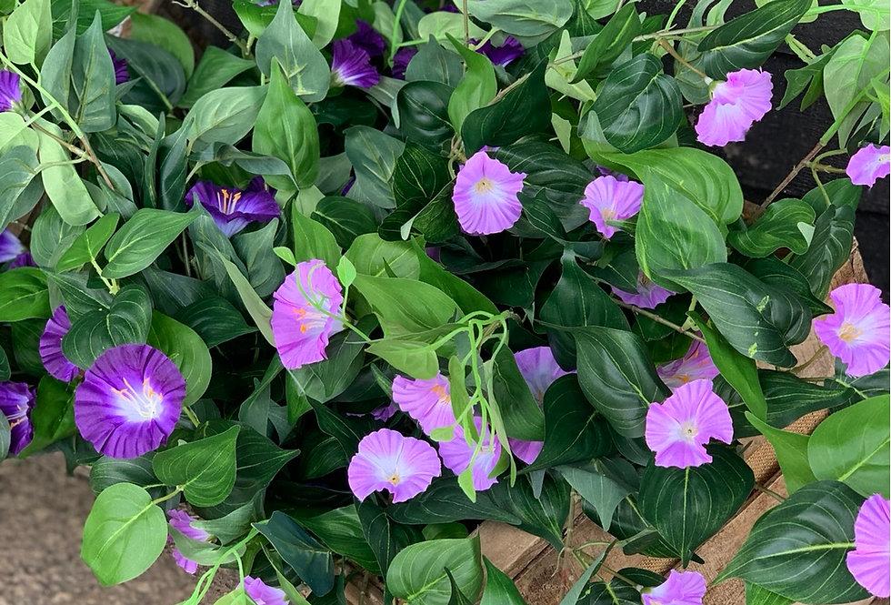 Petunia Bush