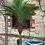 Thumbnail: Palm Tree Large