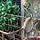 Thumbnail: Hanging Basket