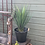 Thumbnail: Potted Faux Yucca