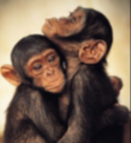 monkeys hugging_edited.jpg