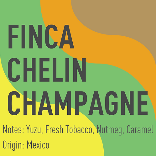 Mexico Finca Chelin Pluma Champagne Washed