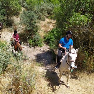 טיול סוסים למשפחות בגליל