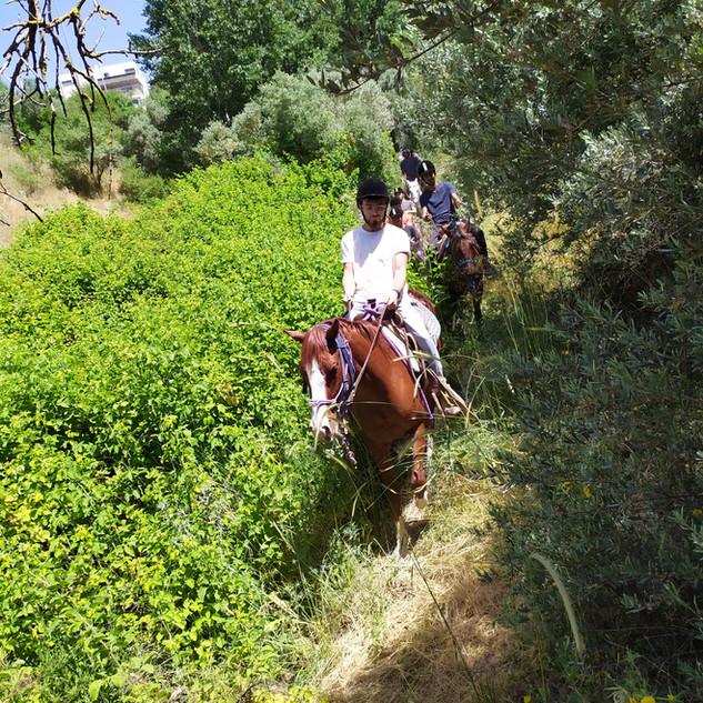 טיול סוסים באביב בגליל