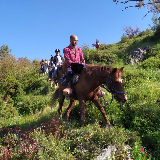 טיולי סוסים לקבוצות בגליל
