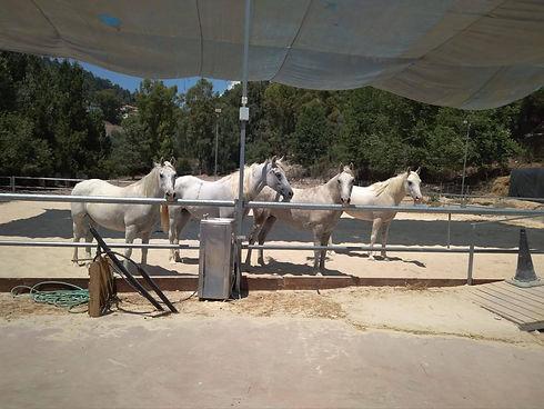 סדנאות ותהליכי בנייה באמצעות סוסים חוות נוף הרים בגליל