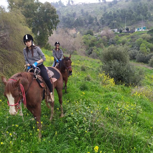 חוות נוף הרים בבגליל טיול סוסי