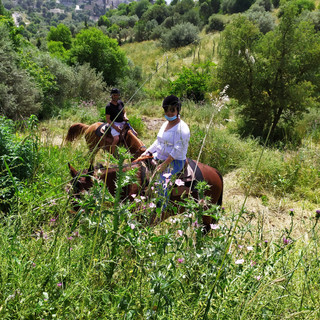 טיולי סוסים למשפחות בגליל