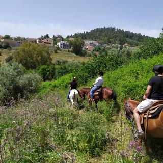טיול לקבוצות על גבי סוסים בגליל